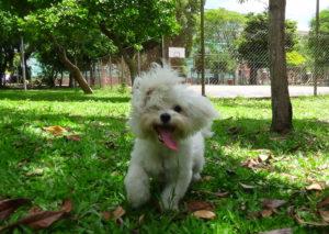 Hotel para cachorro Porto Alegre zona norte
